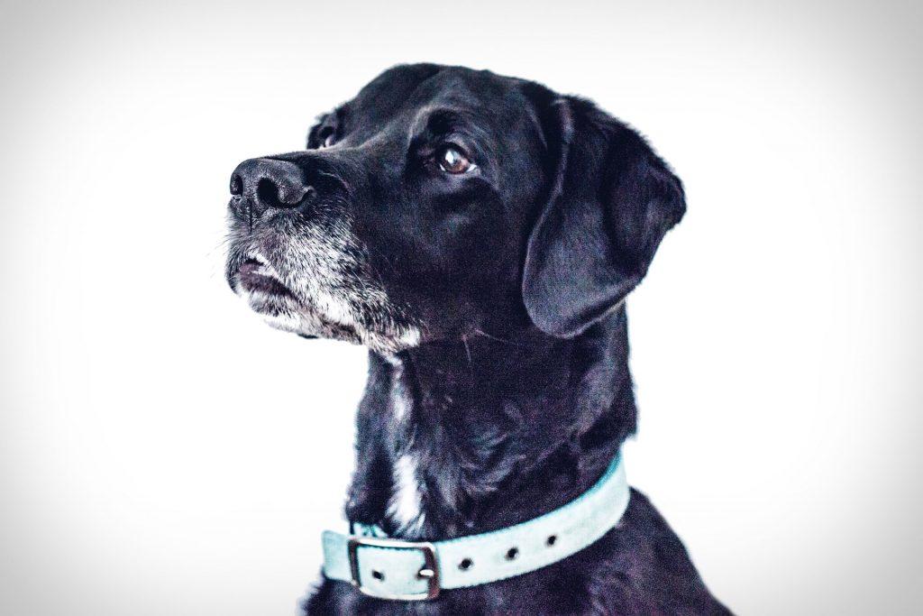Tsa San Antonio Dog Adoption